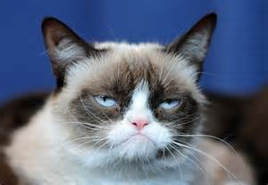 grumpy cat pictures grumpy cat pictures breed personality history