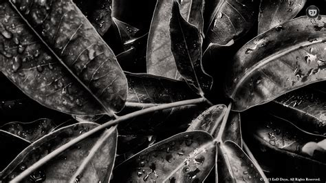 Abstract Black And White Images Hd by Abstract Photography Black And Whit Hd Wallpaper