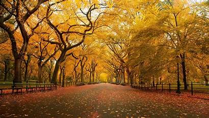Fall Desktop Wallpapers 1080p Widescreen Brighter Shine