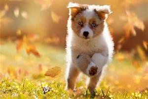 Vermieter Verbietet Hund : urlaub mit hund alle infos und wertvolle tipps ~ Lizthompson.info Haus und Dekorationen