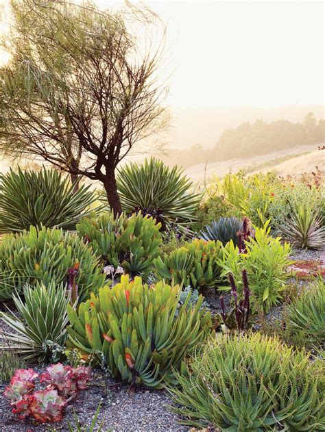 succulents agave 17 best images about g succulents cacti on pinterest gardens san diego and texas gardening