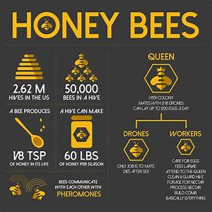 Infographic About Bees