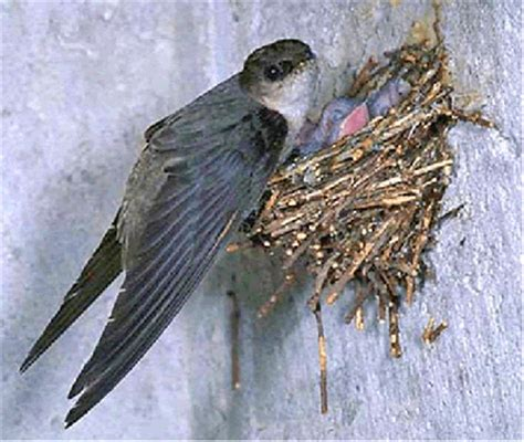 what is that chirping coming from my chimney