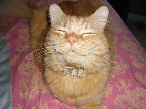 de los gatos mas sonrientes de internet