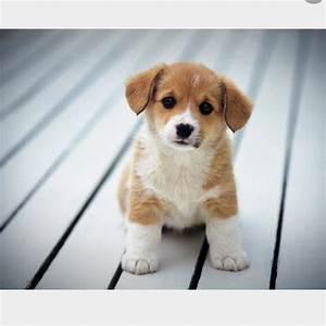 Bild Mit Geburtsdaten : hunderasse auf bilder name tiere hund haustiere ~ Frokenaadalensverden.com Haus und Dekorationen