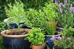 Gurken Anbauen Im Topf : gem se im topf pflanzen 6 wichtige anbautipps ~ Frokenaadalensverden.com Haus und Dekorationen