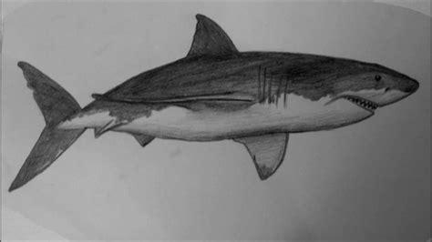 draw  shark step  step easy video  beginners