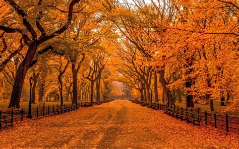 Fall Backgrounds New York by Autumn In Central Park Hd Wallpaper Background Image