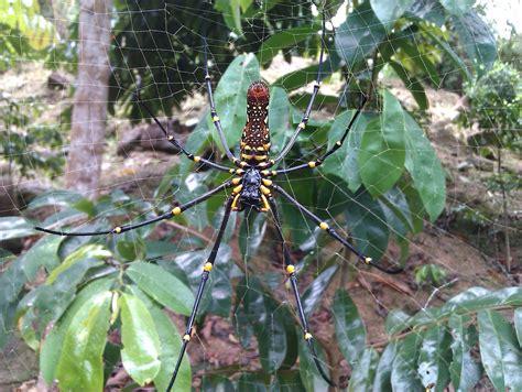 mini fruit farmatpeterteancom  house atmalaysia spider