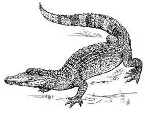 Free Crocodile Clipart  1 Page Of Public Domain Clip Art