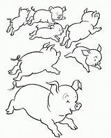 Pig Coloring Pigs Pages Print Many Comments Beach Coloringhome sketch template