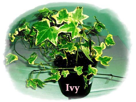 ต้นไม้ที่นิยมปลูกในขวดแก้ว - terrarium สวนจิ๋วในขวดแก้ว