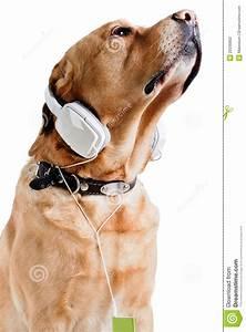 Dog listening to music stock photo. Image of shot, ideas ...
