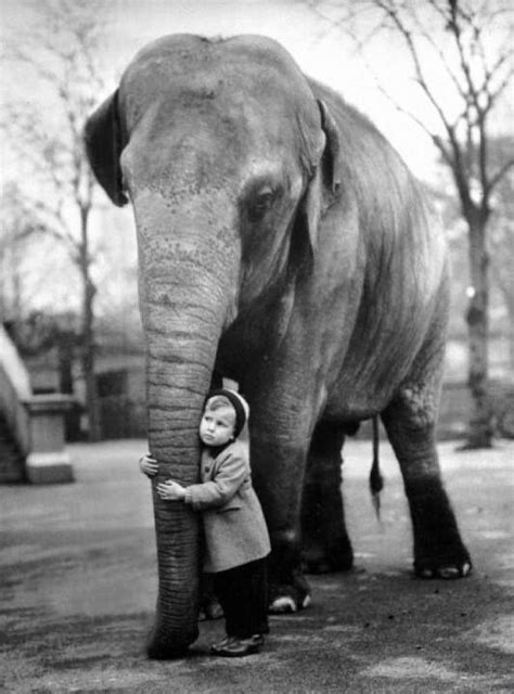 elephant zoo boy elephants animals holding trunks grossi 1958 edward london persbaglio asian child taringa trunk nero bianco indian fotostoria
