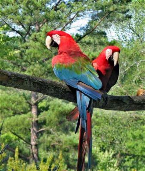 big colorful bird contest big colorful birds read guidelines