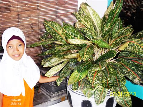 tanaman hias menyedapkan pandangan mata oleh mawan sidarta