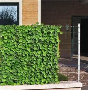 Wetterfeste Kunstpflanzen Balkon : k nstliche hecken ~ Michelbontemps.com Haus und Dekorationen
