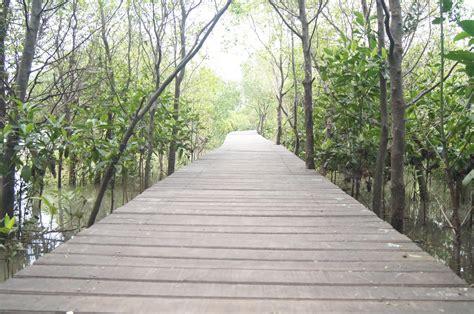 menikmati keindahan ecowisata mangrovesurabaya