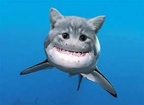 cat shark the student pocket guide 5 fantastic new shark species