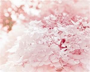 Pastel Pink Valentines Hydrangeas by ShadetreePhotography