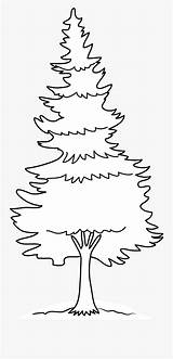 Coloring Tree Pines Pine Clip Clipartkey sketch template