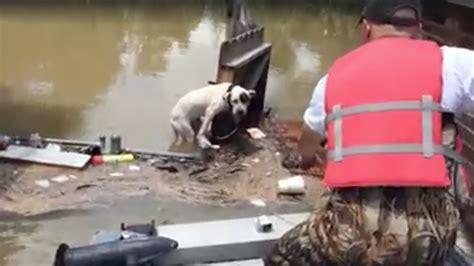 stranded dog clinging  fence rescued  louisiana