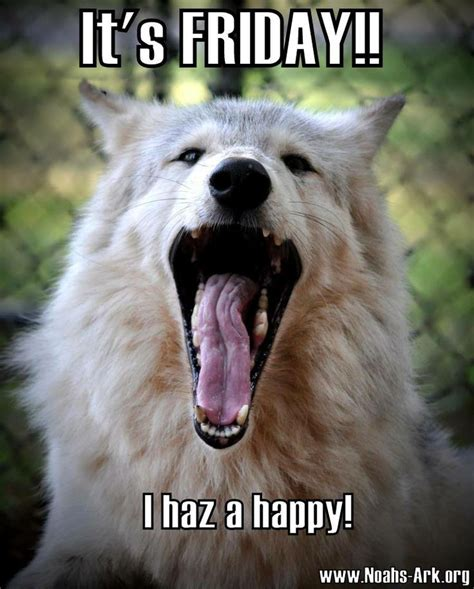 Funny Wolf Memes - 17 best images about noah s ark on pinterest leo lion golden tiger and tiger lilies