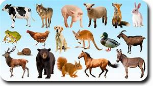Image Gallery learning animals