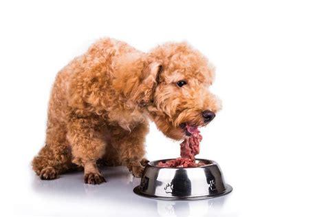 hund dauerdurchfall
