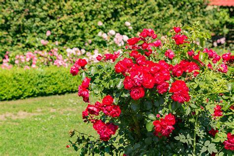 Botanischer Garten Usedom by Sehensw 252 Rdigkeit Botanischer Garten Usedom Information