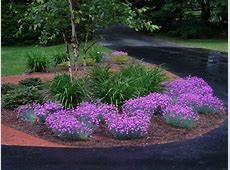 19 best images about Garden dianthus Firewitch on