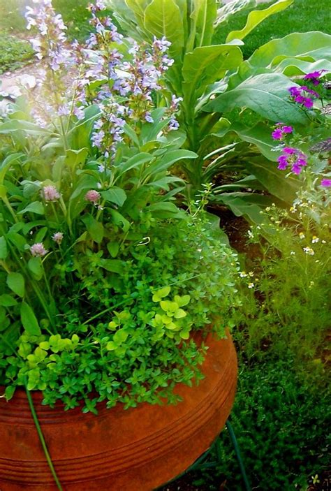 10 Best Images About Edible Container Gardens On Pinterest