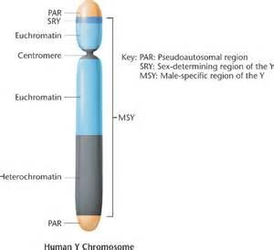 Chromosome Y Pseudoautosomal Region