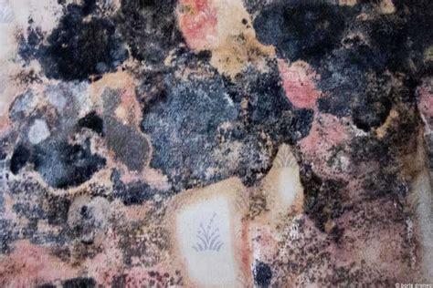 moisissure mur chambre mur avec moisissure gallery of peinture anti moisissure