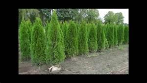 Quels Arbustes Pour Une Haie : planter une haie plantes de haie et arbustes pour haie ~ Premium-room.com Idées de Décoration