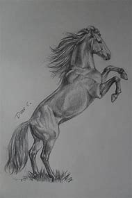 Drawing Horse of Pencil Sketches