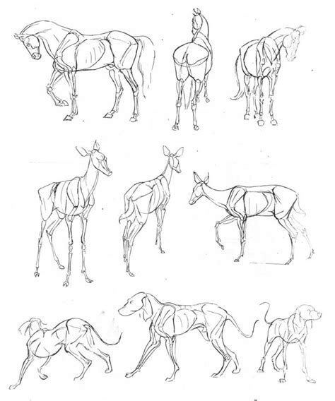 love animals  drawing    add
