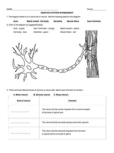 nervous system worksheet answer key lesson plans inc 2008