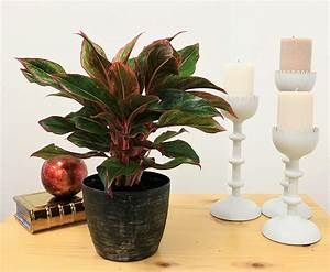 Look, At, These, 9, Indoor, Plants, You, Must, Include, In, Your, Collections, This, 2020, Biology, Nature