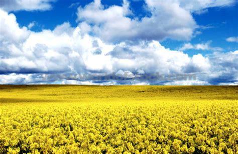 fiori di bach e depressione tristezza depressione e fiori di bach curarsi con i fiori