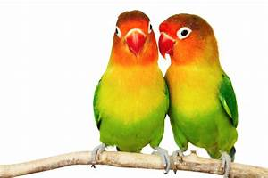 IMAGES   GOOGLE IMAGES   BEST GOOGLE IMAGES: love birds