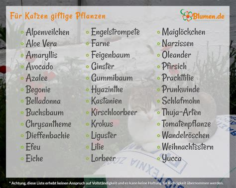 Giftige Zimmerpflanzen Für Katzen by Blumen De Pflanzen F 252 R Katzen Welche Pflanzen Sind
