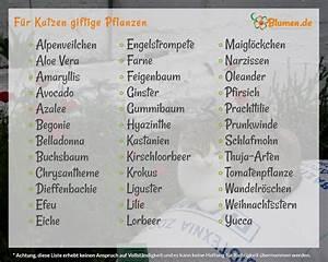 Winterharte Pflanzen Liste : pflanzen f r katzen welche pflanzen sind ~ Michelbontemps.com Haus und Dekorationen