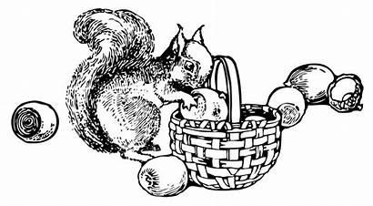 Squirrel Nuts Clip Gathering Clipart Arts Colorear