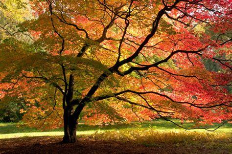 Japanischer Garten Leverkusen Plan by Calgary Tree Pruning And Removal Turning Leaf Tree