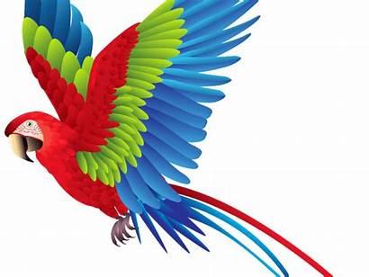 Parrot Clipart Transparent Clip Webstockreview Cliparts