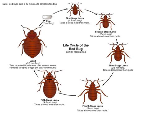 bed bug exterminator  bay area bed bug pest control