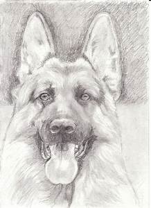 395 best GSD drawings & paint images on Pinterest | German ...