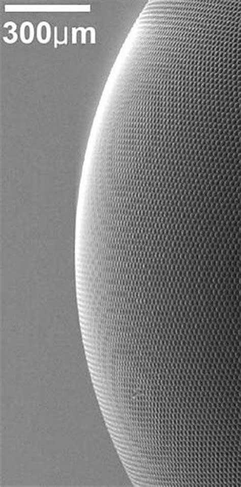 Artificial Eye Borrows From Nature - ScienceAGoGo