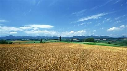 Barley Shakes Tao Heung 1366 Screen Album
